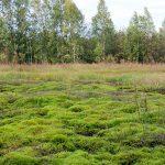 Infamous bog