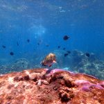 The reefs were full of fishes and corals.