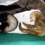 Bibon and Biba sleeping