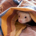 Bibon hiding