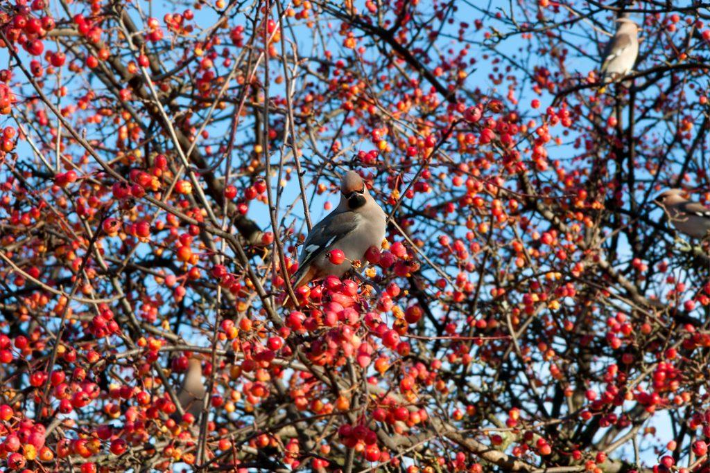 Bird in Helsinki