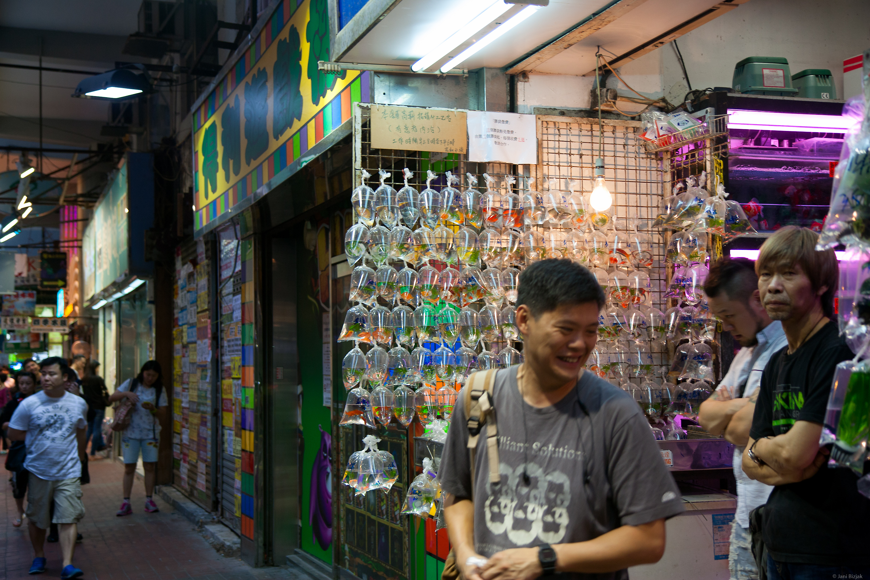 Fish shop selling all kinds of exotic fishes.