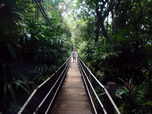 Suspension bridge in the park