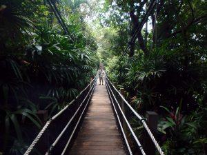 Suspension bridge in the park
