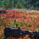 Colorful vegetation on island
