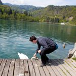Me trying to pet a swan at lake Bled.