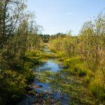 Swamp in Luleå