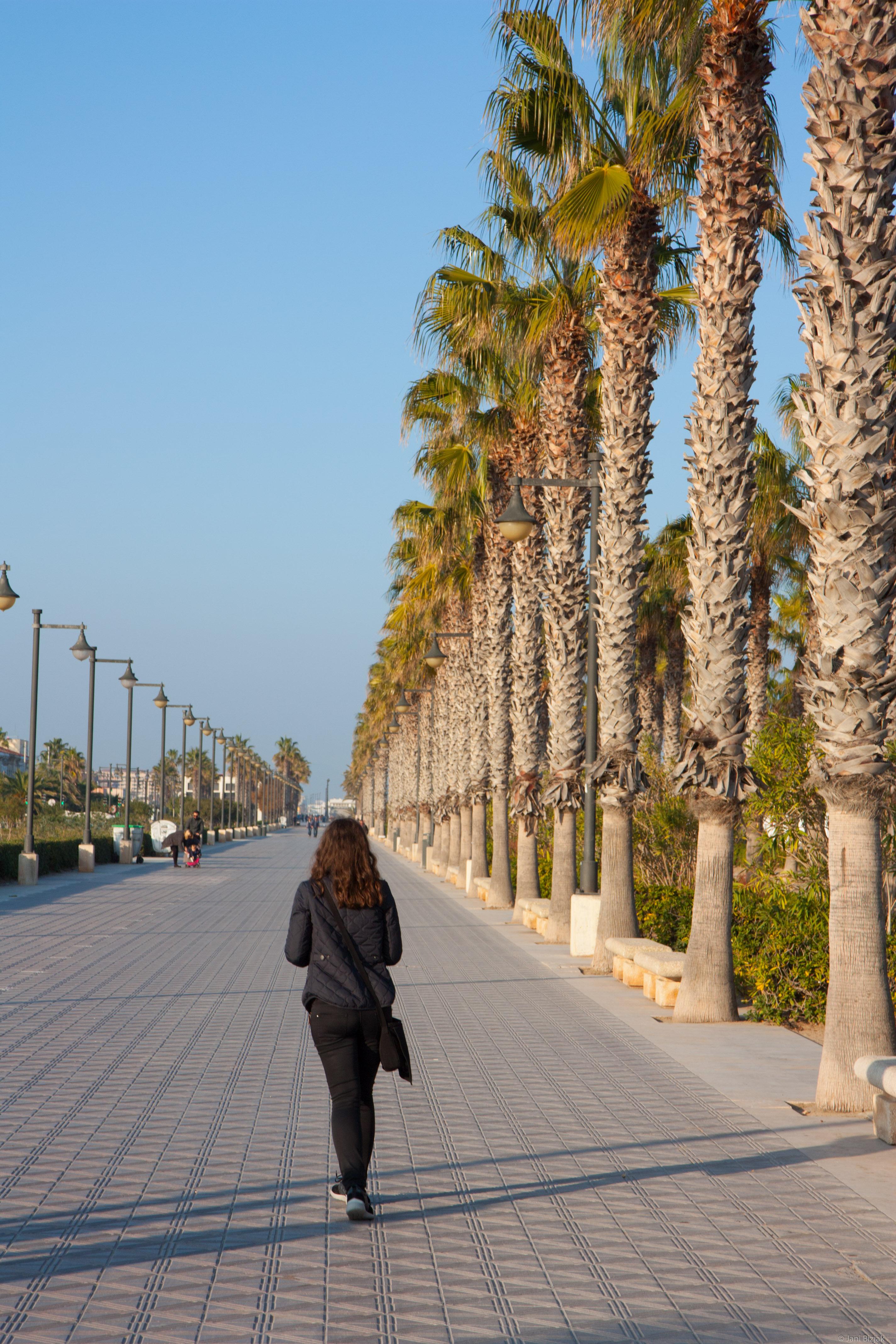 Paths alongside beach