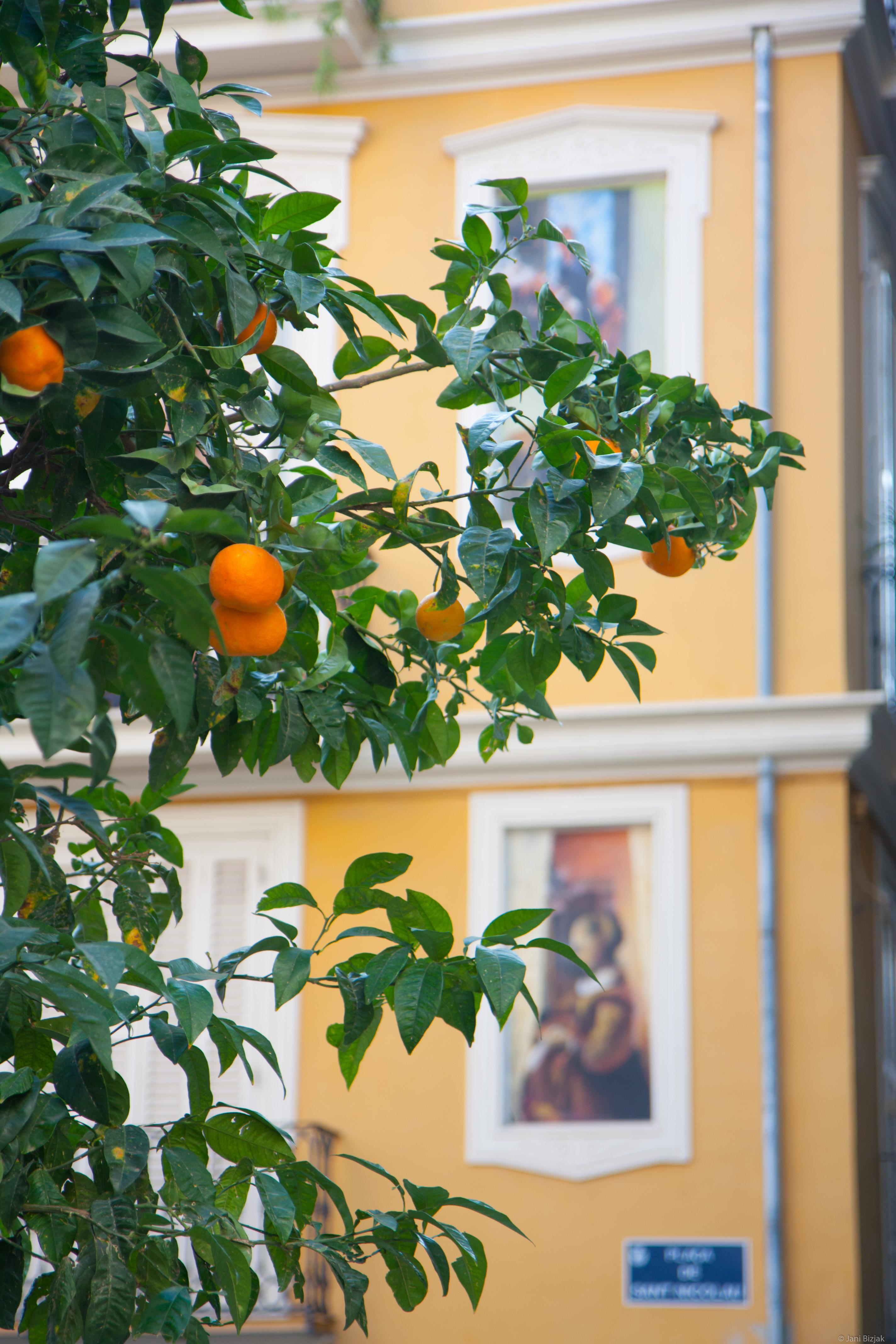 Mandarins in the street