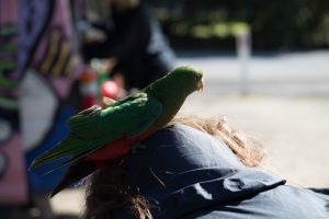 First landing on Veronika's head. The parrot really scared her.