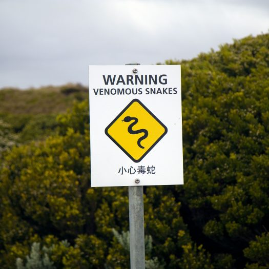 Well it wouldn't be Australia without some dangerous animals around every bush.