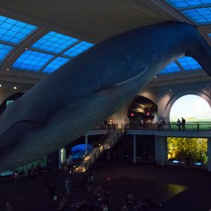 Blue whale. It's enormous.