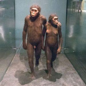 Some human ancestors