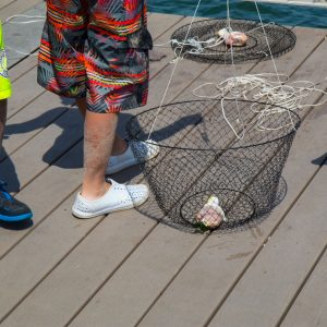 Fishing with chicken drum as bait.