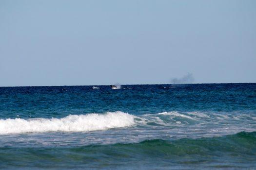 Whales near the beach