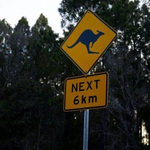 Still in kangaroo land
