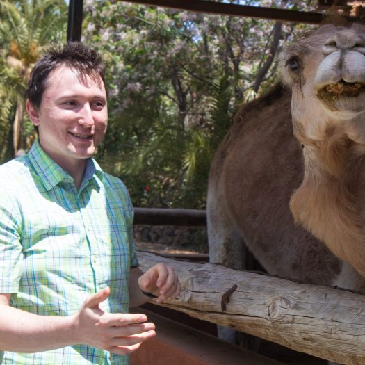 Petting a camel.