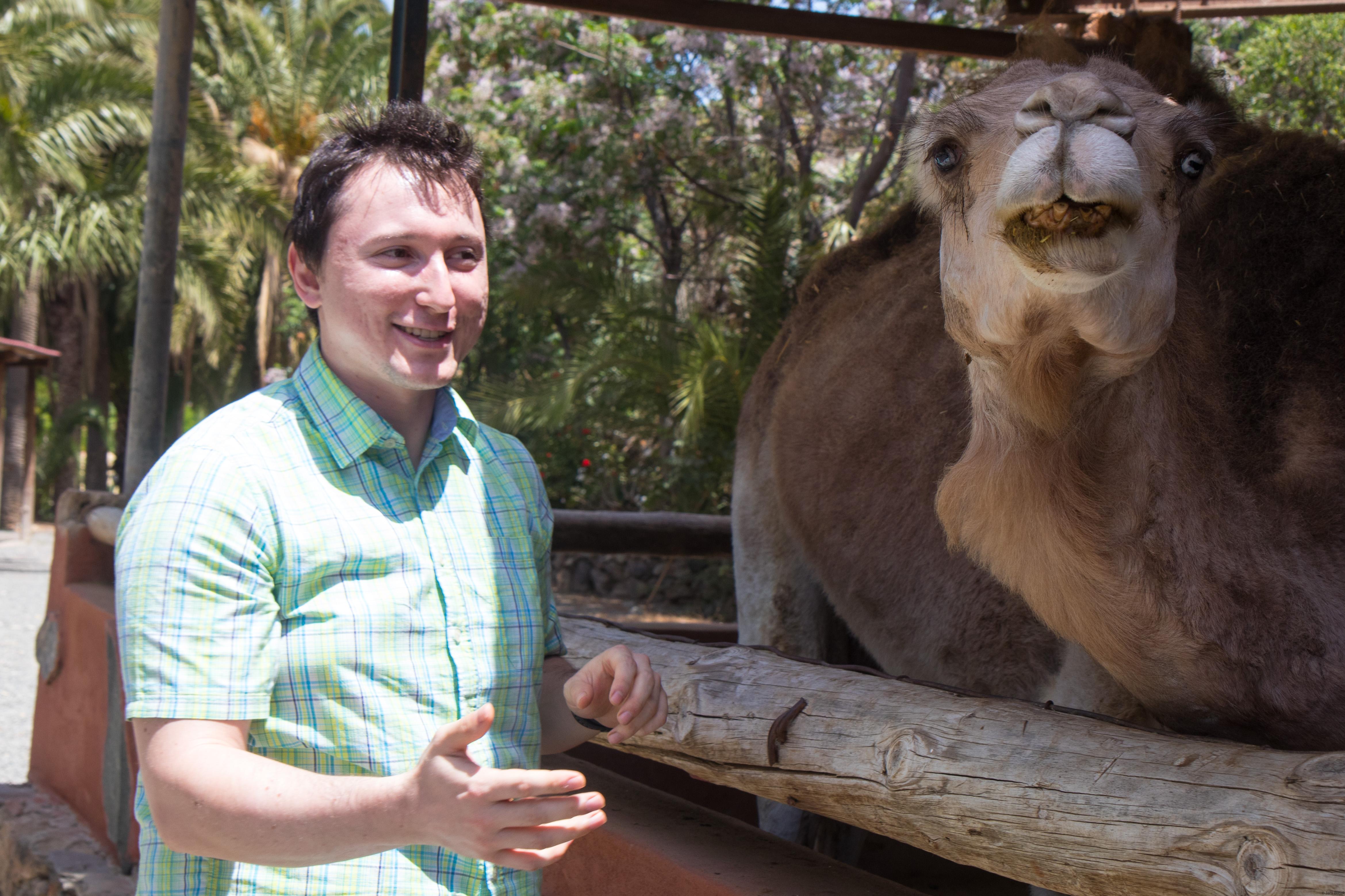 Petting a camel.