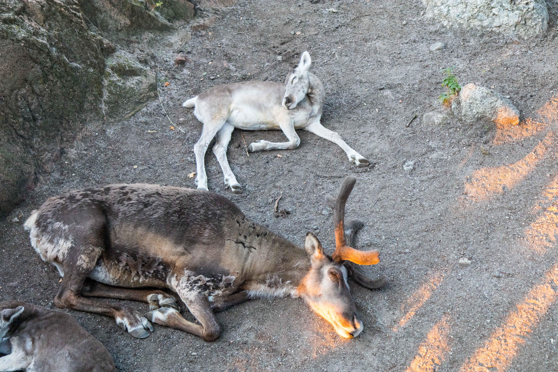 Elk and her baby