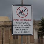 Don't feed the pigeons.